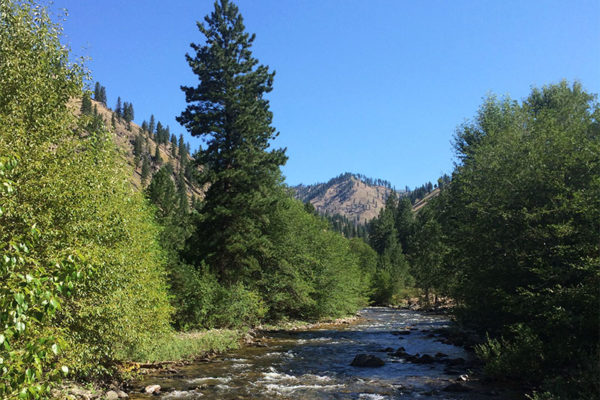Crooked Creek in summer.