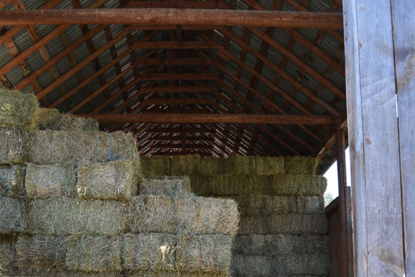 Hay stored in the barn.