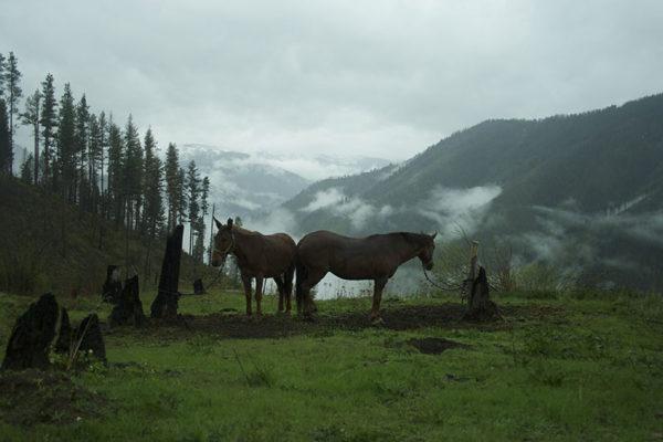 Stock at hunting camp.